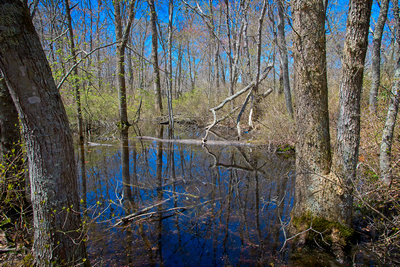Woodsy Trail Reflections_20210501_850_1796