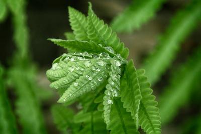 Droplets On Fern_20210510_850_2373