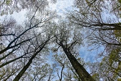 Spring Budding Overhead_20210509_850_2360