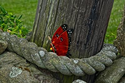 Block Island Butterfly Creation_20210612_850_3921