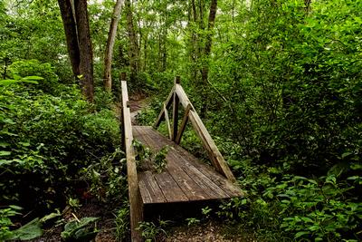 Bridge On The Trail_20210710_850_7503