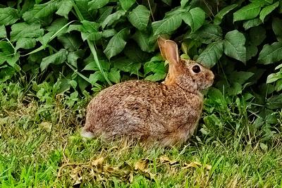 Indulgent Bunny_20210722_850_8119