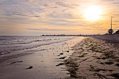 Beach Birds Settle In The Seaweed 20210817 850_8883