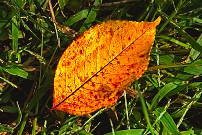 A Leaf Falls 20210919 850_0418