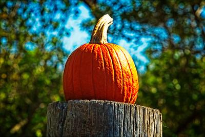 Sakonnet Pumpkin 20210926 850_1034_Export