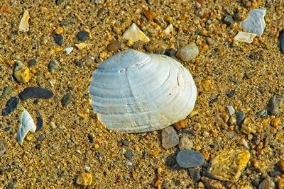 Conimicut Beach Clam Shell 20210914 850_0382