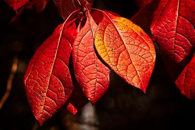 Autumn Leaves Near Home 20211015 850_2288