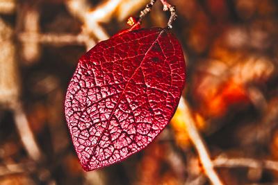 Leaf Color Detail 20211022 850_2435