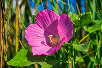 FlowerAtPointJudith_20200808_850_4642