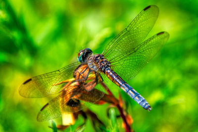AsTheDragonFlies3_20200906_850_9560