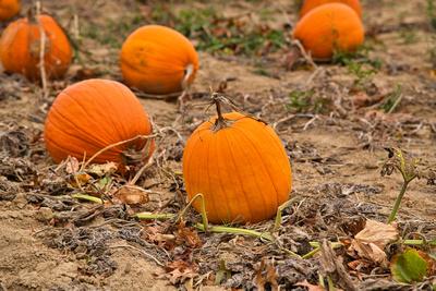Pumpkin__ReadyToGo_20201010_850_6226