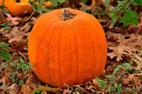 Pumpkin_ReadyToPluck_20201010_850_6231