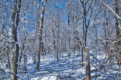 SnowyWood_20210208_850_6404